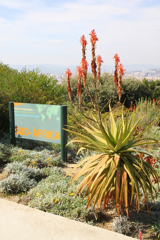 Le jardin botanique de montjuic letizia barcelona for Jardin botanico montjuic