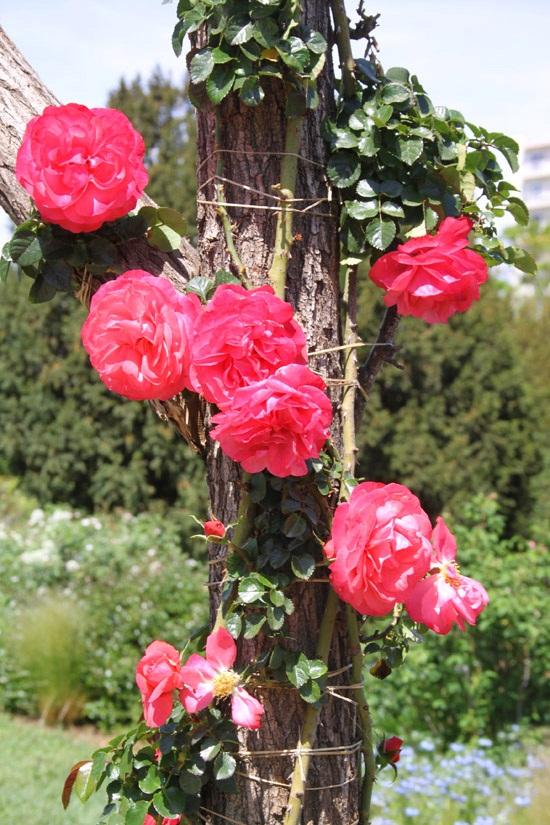 rosebcn (8)
