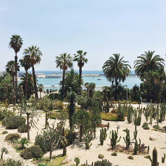 cactus garden1