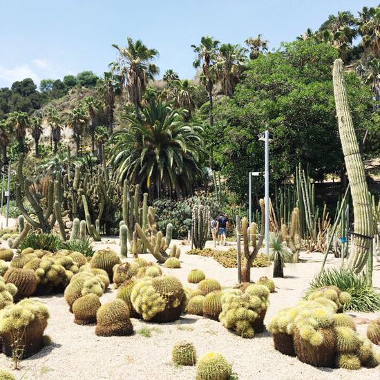 cactus garden11