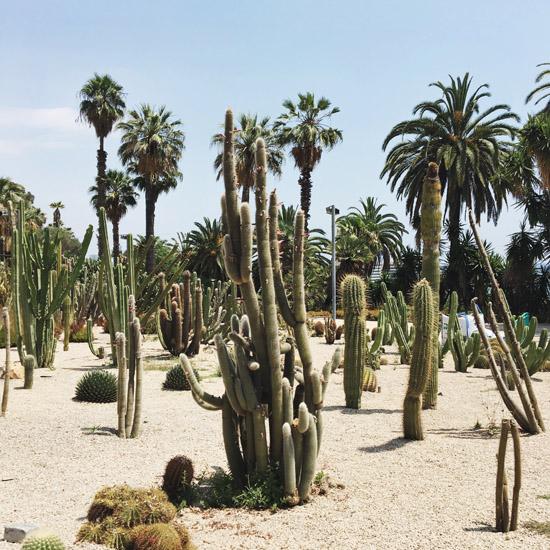 cactus garden13