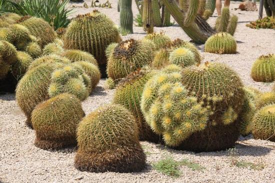 cactus garden2