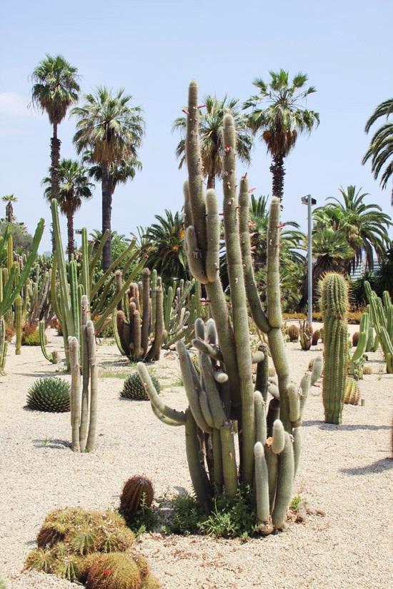 cactus garden3