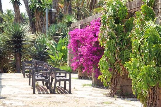 cactus garden7