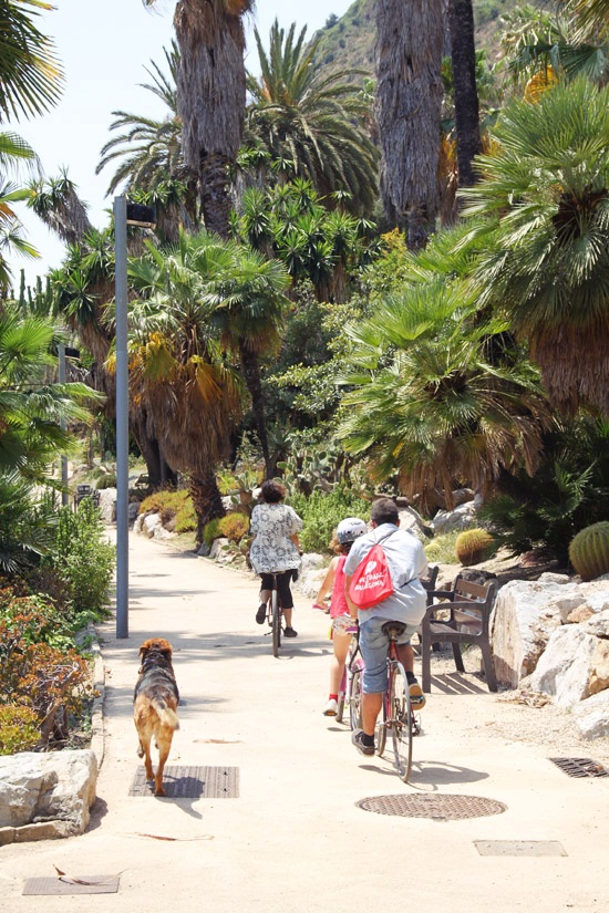 cactus garden9