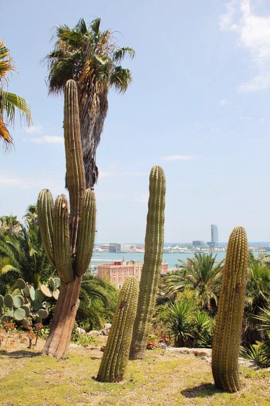 cactus garden8